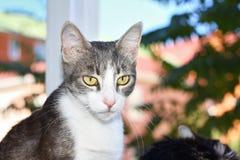 Retrato de um gato fumarento Foto de Stock Royalty Free