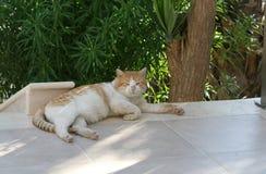 Retrato de um gato gordo sujo imagem de stock