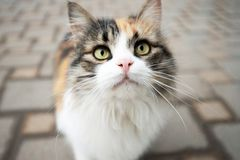 Retrato de um gato macio bonito no fundo de pavimentar telhas imagens de stock