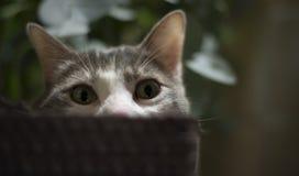 Retrato de um gato na cesta relaxado Foto de Stock