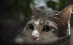 Retrato de um gato na cesta relaxado Imagem de Stock