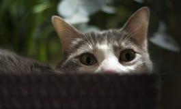 Retrato de um gato na cesta relaxado Imagens de Stock