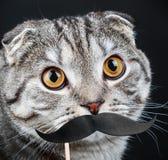 Retrato de um gato novo com bigodes de papel Fotografia de Stock