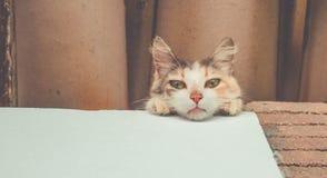 Retrato de um gato novo que olha à câmera imagem de stock