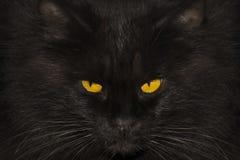 Retrato de um gato preto, close up imagens de stock