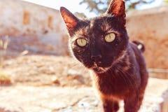 Retrato de um gato preto desabrigado, olhando na câmera Na rua Fotos de Stock Royalty Free