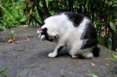 Retrato de um gato preto e branco no parque de Ueno no Tóquio imagens de stock royalty free