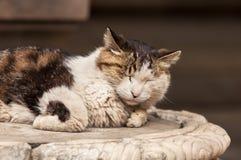 Retrato de um gato que dorme no suporte de mármore foto de stock