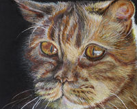 Retrato de um gato vermelho Fotos de Stock