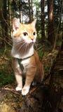 Retrato de um gato vermelho na cabeça da floresta, olho, orelhas, cabelo fotos de stock