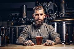 Retrato de um homem tattooed do moderno com barba à moda e do cabelo na camisa que senta-se no contador da barra com vidro da cer fotografia de stock