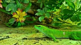 Retrato de um lagarto do réptil fotos de stock