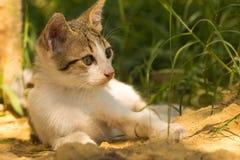 Retrato de um levantamento bonito do gato do bebê Fotografia de Stock