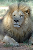 Retrato de um rei. Fotos de Stock Royalty Free
