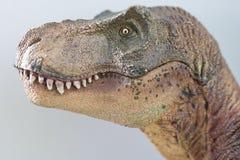Retrato de um rex do tiranossauro isolado no fundo branco foto de stock