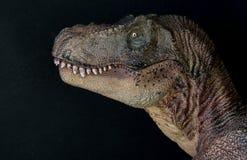 Retrato de um rex do tiranossauro no fundo preto imagens de stock royalty free