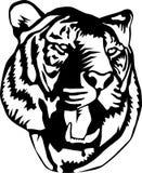 Retrato de um tigre Foto de Stock