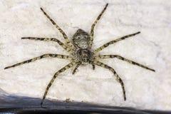 Retrato de uma aranha fotos de stock