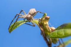 Retrato de uma aranha imagem de stock royalty free
