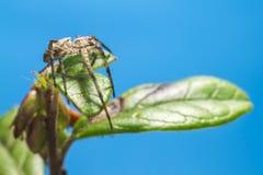Retrato de uma aranha fotos de stock royalty free