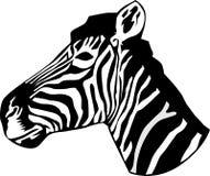 Retrato de uma cabeça da zebra Imagens de Stock