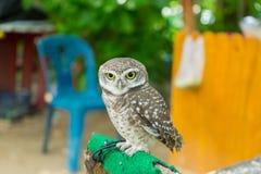 Retrato de uma coruja no jardim zoológico Imagens de Stock Royalty Free