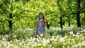 Retrato de uma menina no jardim com dentes-de-leão vídeos de arquivo