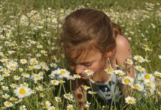 Retrato de uma menina no meio de um campo da camomila fotos de stock royalty free