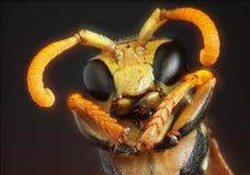 Retrato de uma vespa imagens de stock