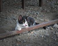 Retrato de uma vista de assento bonito do gato preto afastado moodily fotografia de stock royalty free
