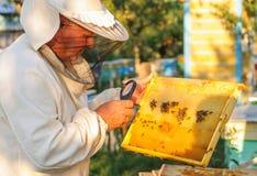 Retrato de un apicultor en el colmenar en la colmena Fotos de archivo libres de regalías
