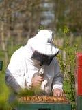 Retrato de un apicultor que recolecta la miel Fotografía de archivo