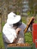 Retrato de un apicultor que recolecta la miel Imágenes de archivo libres de regalías