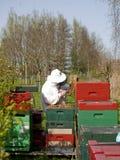 Retrato de un apicultor que recolecta la miel Foto de archivo