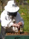 Retrato de un apicultor que recolecta la miel Fotografía de archivo libre de regalías