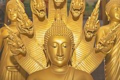 Retrato de un Buda de oro Wat Chalong Temple interior localizado estatua Imagen de archivo libre de regalías