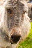 Retrato de un burro en un campo en día soleado Foto de archivo
