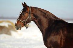 Retrato de un caballo fotografía de archivo libre de regalías
