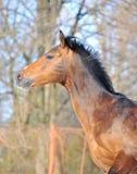 Retrato de un caballo en el movimiento Fotos de archivo libres de regalías
