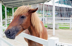 Retrato de un caballo en fondo de la granja Imagenes de archivo