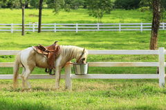Retrato de un caballo hermoso Fotografía de archivo libre de regalías