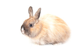 Retrato de un conejo Fotografía de archivo libre de regalías