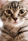 Retrato de un gatito Foto de archivo