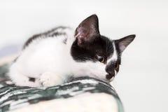 Retrato de un gatito con el fondo blanco claro Foto de archivo