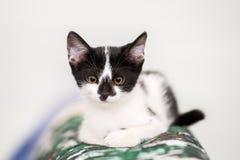 Retrato de un gatito con el fondo blanco claro Foto de archivo libre de regalías