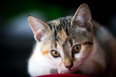 Retrato de un gatito con el fondo claro Fotos de archivo libres de regalías