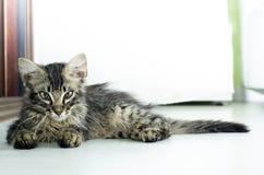 Retrato de un gatito del gato atigrado del bebé que miente en el piso interior Fotos de archivo