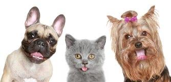 Retrato de un gatito divertido y de dos perritos felices Fotografía de archivo