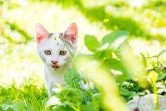 Retrato de un gatito en la hierba con el fondo claro Fotos de archivo