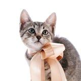 Retrato de un gatito rayado con una cinta Fotos de archivo
